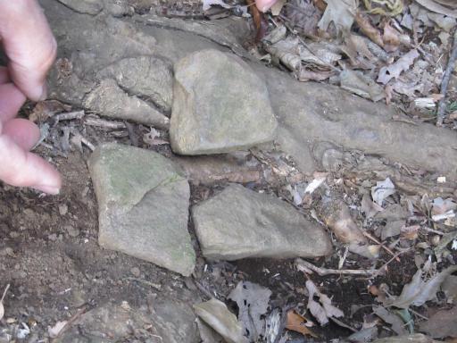 20120205・緑の森11