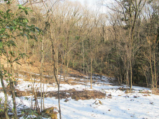 20120205・緑の森17