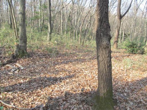 20120205・緑の森16