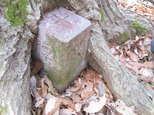 20120205・緑の森15