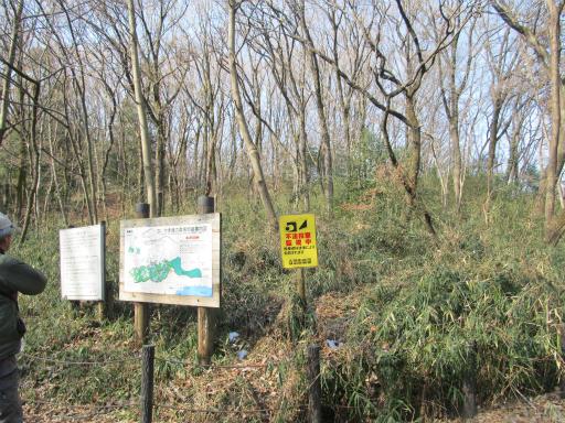 20120205・緑の森13
