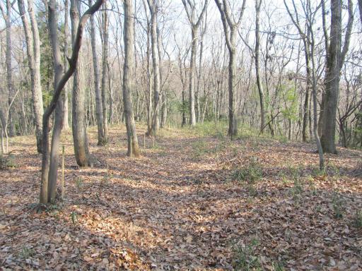 20120205・緑の森14
