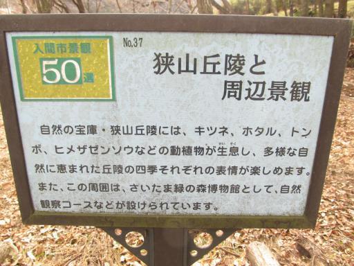 20120205・緑の森26・拡大