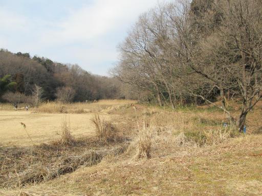 20120205・緑の森28