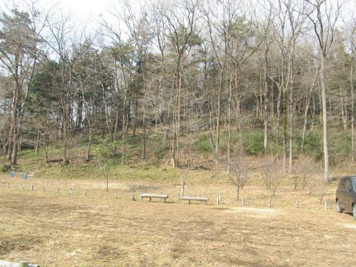 20120205・緑の森27