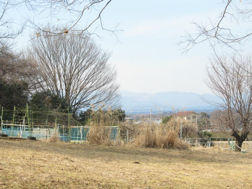 20120205・緑の森25