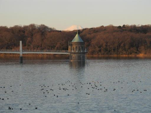 20120209・早朝狭山湖09