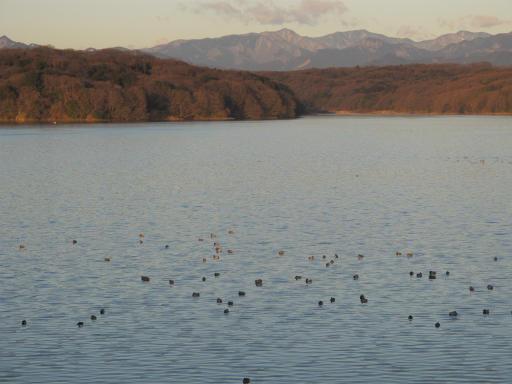 20120209・早朝狭山湖11
