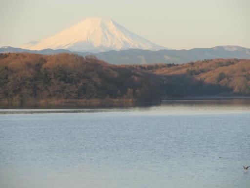 20120209・早朝狭山湖14