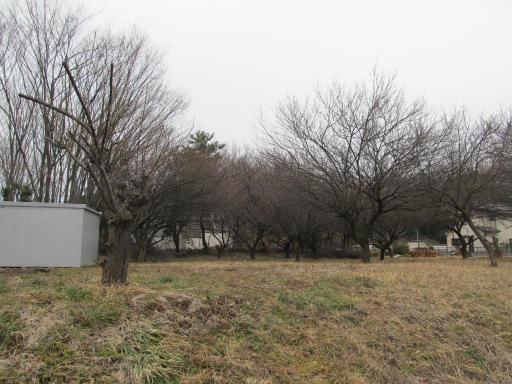 20120212・中氷川神社23