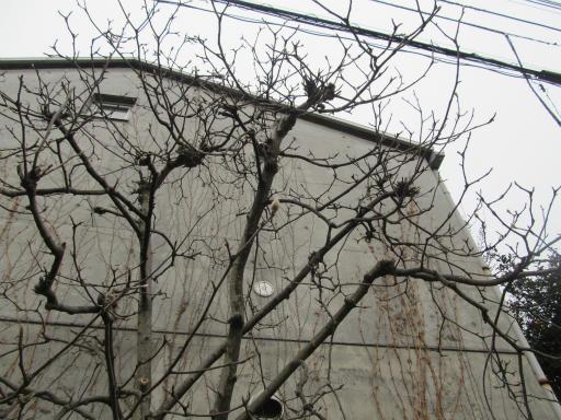 20120212・中氷川神社22
