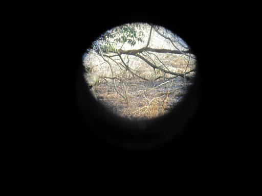 20120219・自然観察会08
