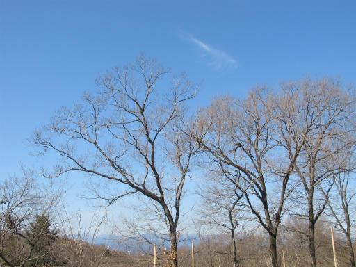 20120219・自然観察会18