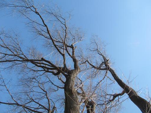 20120219・自然観察会17
