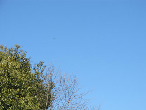 20120219・自然観察会23・ノスリ