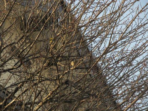 20120218・荒幡散歩1-01
