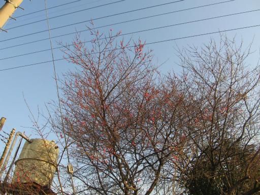 20120218・荒幡散歩1-16
