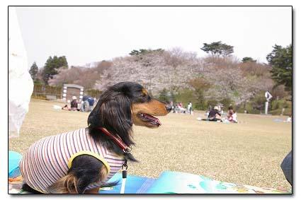 2005_0501pen0018.jpg