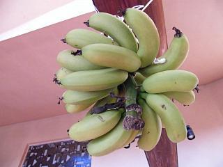 banana12 7