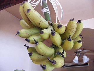 banana1gou1210 1