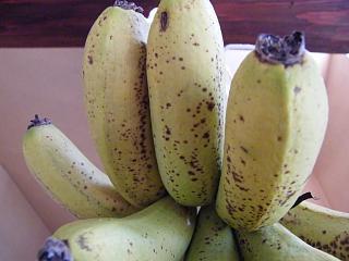 banana1gou1210 2