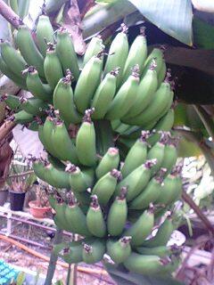 banana2gou0220 5