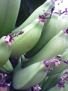 banana2gou0322 2