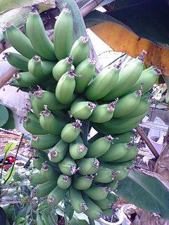 banana0417 1