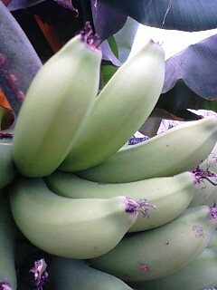 banana0417 2