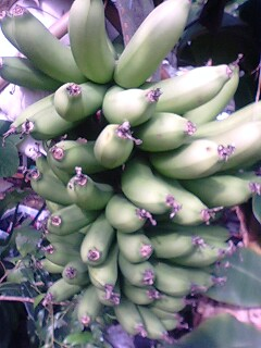 banana0513 1