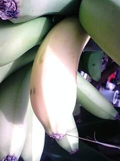 banana3gou2 0518
