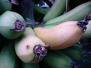 banana0527 1