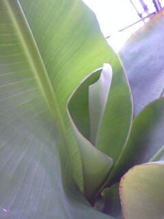 banana4gou0531 2