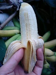 banana0603 2