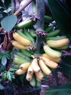 banana0613 4