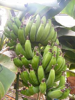 banana2gou0109.jpg