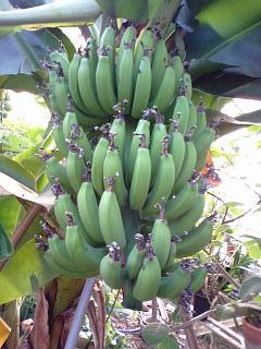 banana2gou1212.jpg
