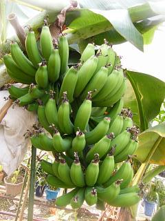 banana2gou20090204.jpg