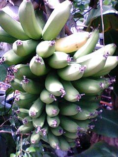 banana3gou0518.jpg