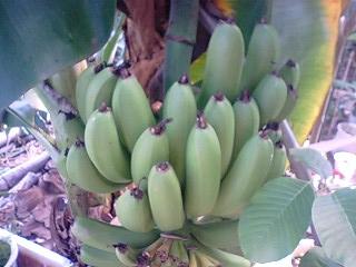 banana4gou1026.jpg