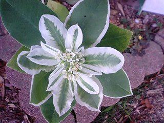 yuhorubia0601.jpg