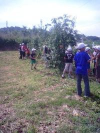 学校リンゴ園