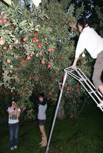 りんご狩り楽しむ学生