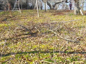 切り落ちた枝