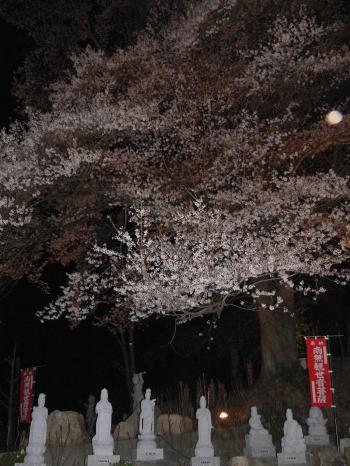 大願寺の夜桜