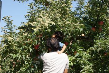 りんご狩り(10・4)