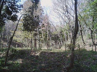 11_20100402054337.jpg