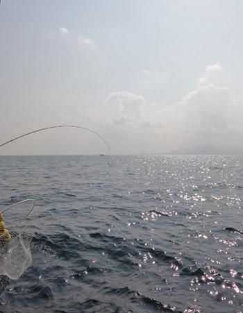 夏泊鯛釣-4