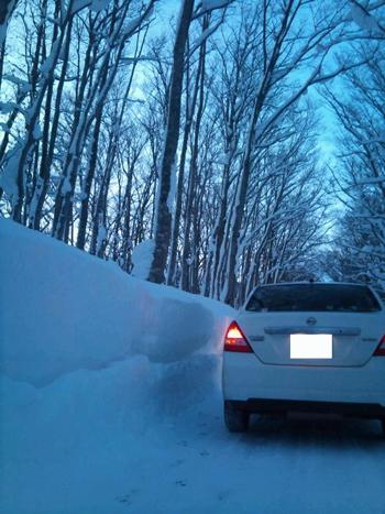 冬ブナ林-4