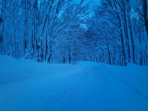 冬ブナ林-5